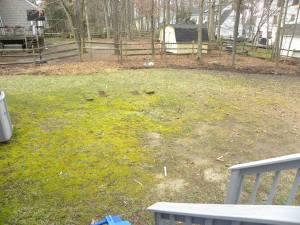 back yard before2