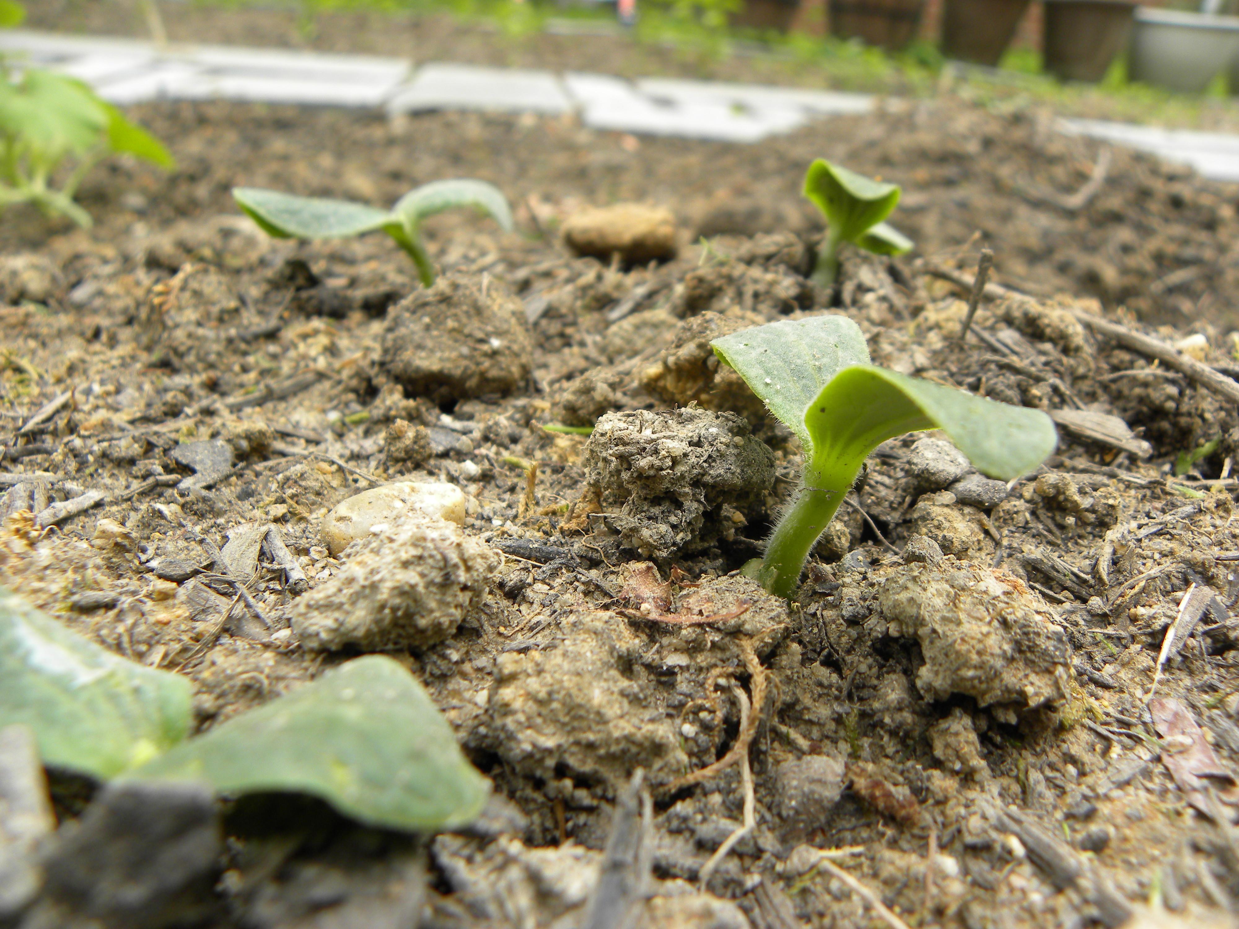 Garden update homemade organic pesticide a two storey home - Homemade organic pesticides ...