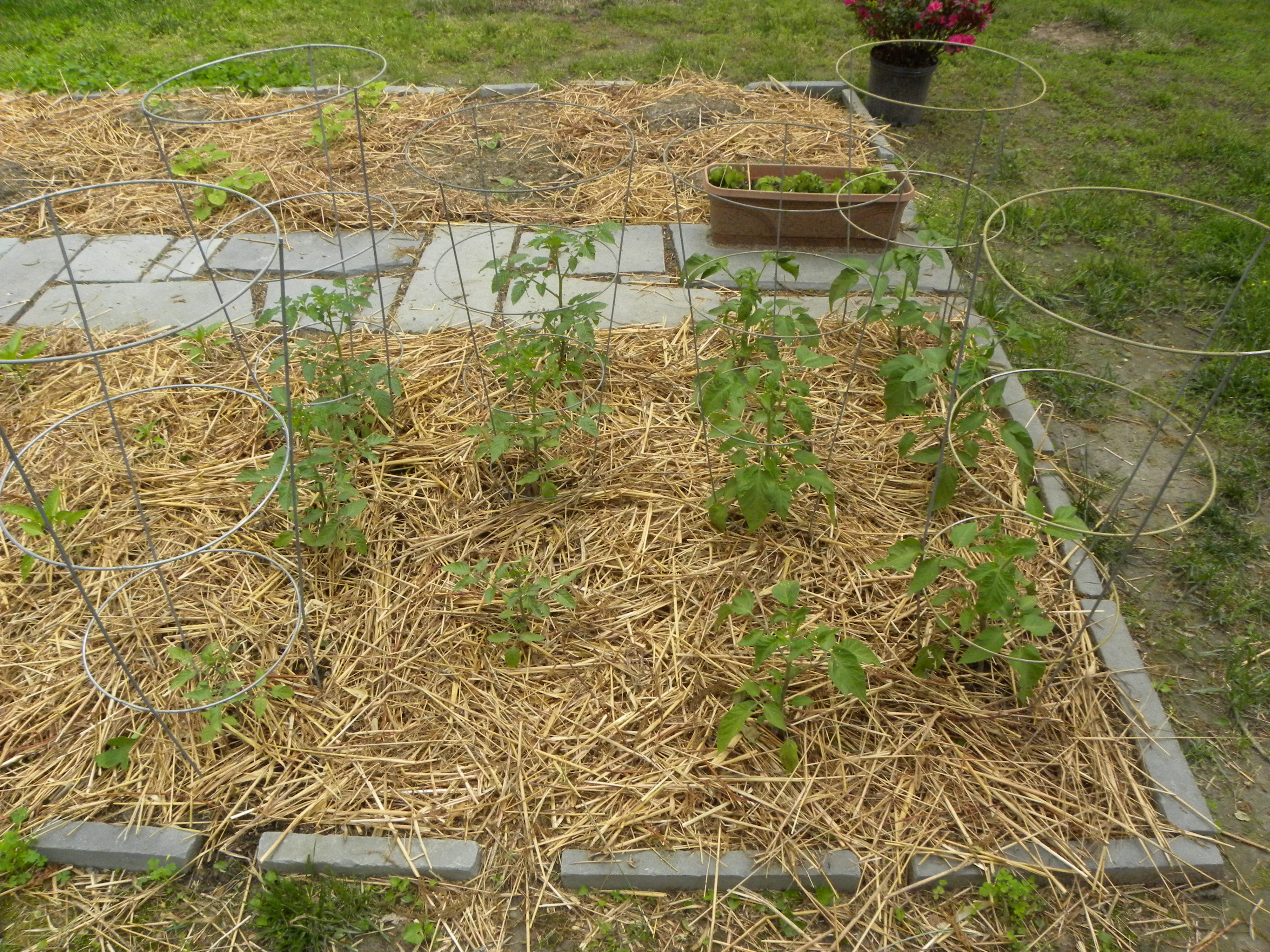 Garden Update Homemade Organic Pesticide A Two Storey Home